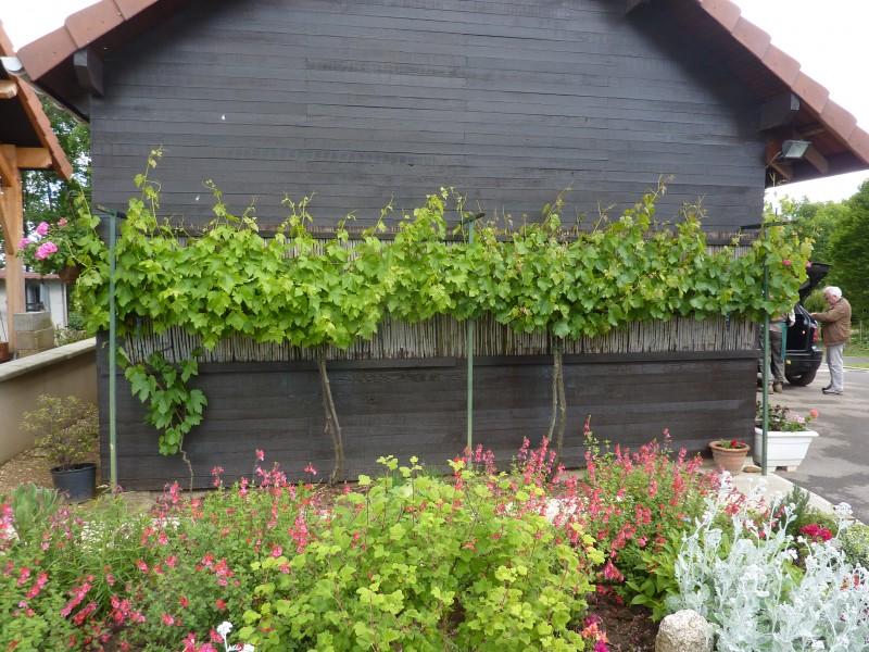 Quand planter la vigne de table id es inspir es pour la - Planter un pied de vigne ...